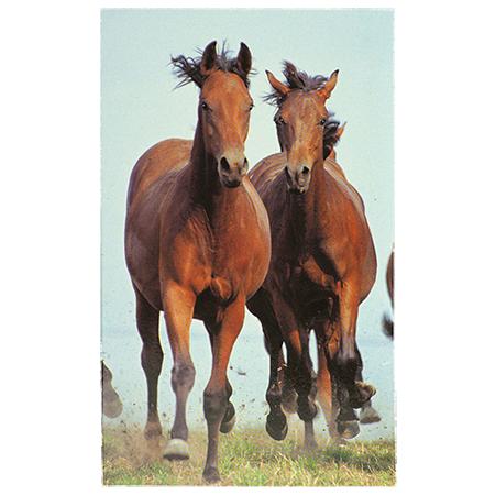 Блокнот Гнедые лошади 58384
